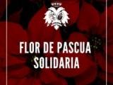 FLOR DE PASCUA SOLIDARIA
